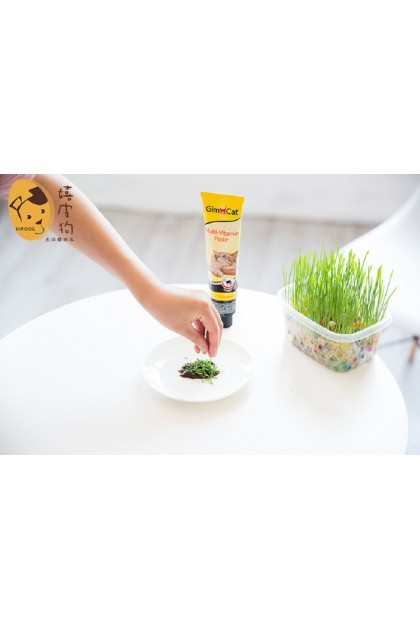 (Ready Stock) Pet Grass Self Grow Natural Pure Mud Healthy Cat Food Plant Kit